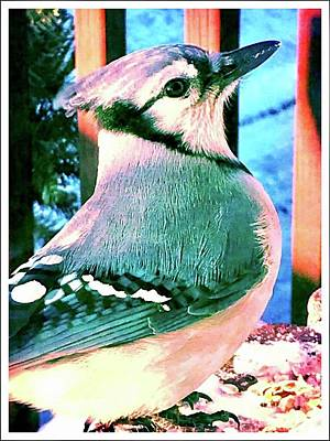 Photograph - Blue Jay by Susan Carella