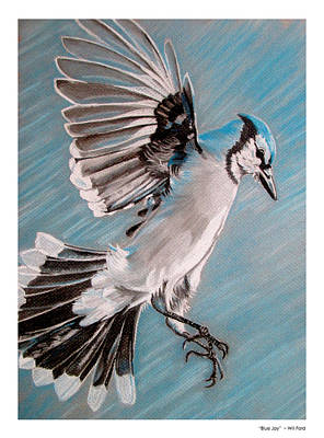 Bluejay Drawing - Blue Jay by William Ford