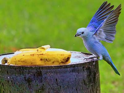 Photograph - Blue Jean by Nadia Sanowar