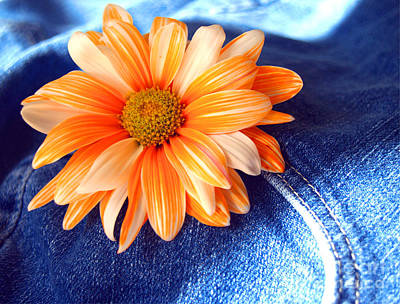 Blue Jeans And Daisies Print by Wendy Mogul