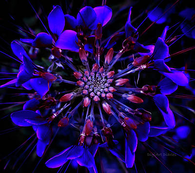 Photograph - Blue Kaleidoscope by DigiArt Diaries by Vicky B Fuller