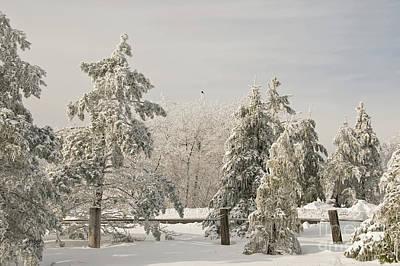 Blue Knob Winter Art Print by Lois Bryan