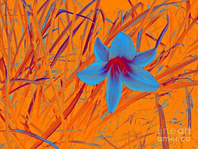 Photograph - Blue Lily by Marcia Lee Jones