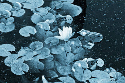 Photograph - Unusual Blue Lily Pads by Femina Photo Art By Maggie