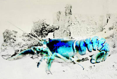 Photograph - Blue Lobster by Diana Angstadt