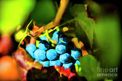 Photograph - Blue Love by Rick Bragan
