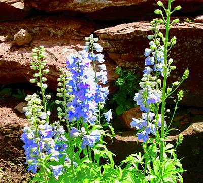 Photograph - Blue Lupins by Stephanie Moore