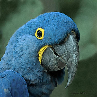 Macaw Digital Art - Blue Macaw 2 by Larry Linton