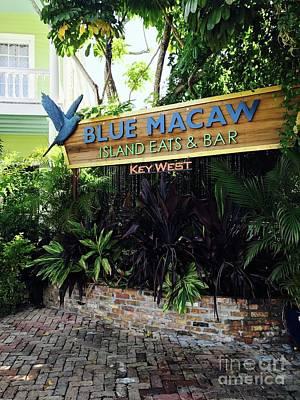 Photograph - Blue Macaw  by Michael Krek