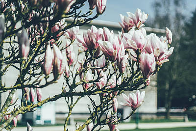 Blue Magnolia Tree Art Print