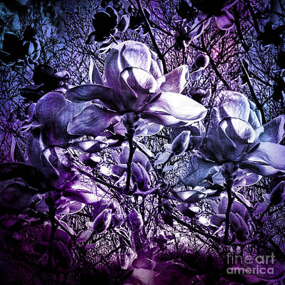 Photograph - Blue Magnolias by Karen Lewis