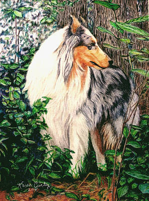 Blue Merle Collie			 Art Print by Karen Curley