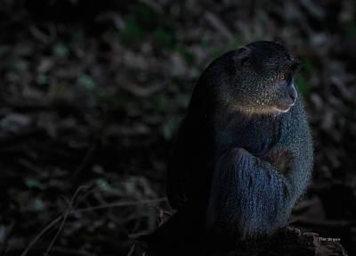 Photograph - Blue Monkey At Nightfall by Tim Bryan