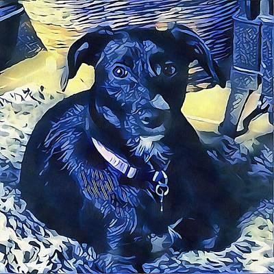 Photograph - Blue Mood Dog by Dorothy Berry-Lound