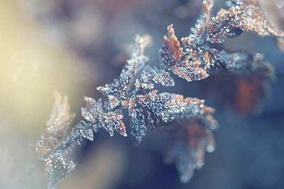Photograph - Blue Mood. Frozen Leaf. Natural Wonder by Jenny Rainbow