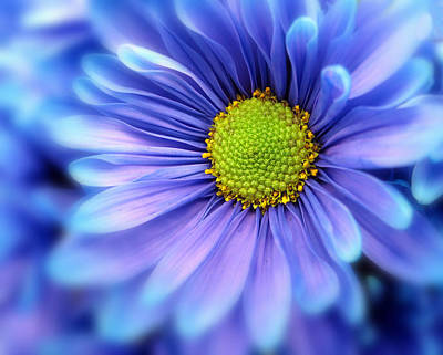 Macro Digital Art - Blue Mood by Jessica Jenney