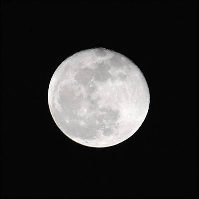 Photograph - Blue Moon 2009 by Jai Johnson