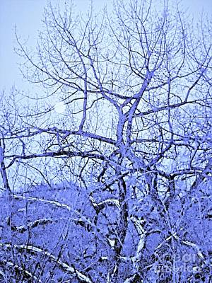 Photograph - Blue Moon by Manuel Matas