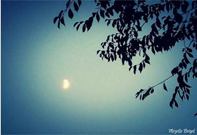 Photograph - Blue Moon by Mozelle Beigel