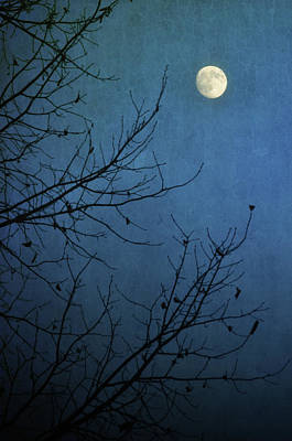 Moonlit Night Photograph - Blue Moon by Susan McDougall Photography