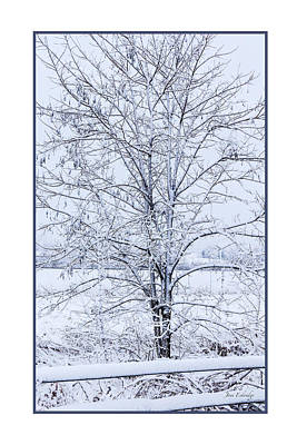 Photograph - Blue Morning In Winter Poster by Joni Eskridge