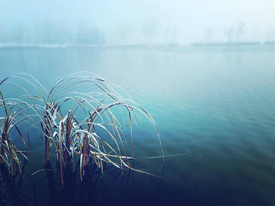 Photograph - Blue Morning by Leanna Lomanski