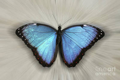 Olympic Sports - Blue Morpho #4 Zoom by Judy Whitton