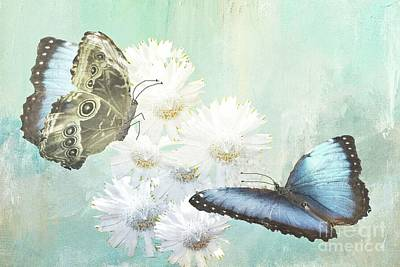 Photograph - Blue Morpho Butterflies And White Gerbers by Janette Boyd