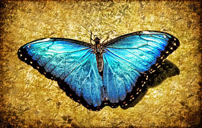 Photograph - Blue Morpho Butterfly by Carolyn Derstine