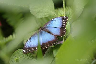 Blue Morpho Butterfly Art Print by Mike Lytle