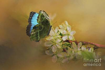 Photograph - Blue Morpho Butterfly On White Flowers by Janette Boyd
