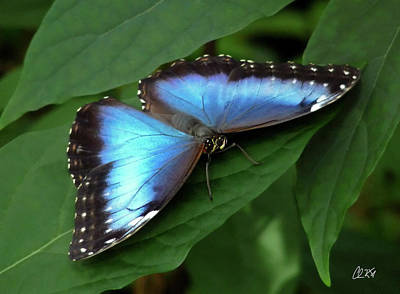 Photograph - Blue Morpho Metal by Chris Kusik