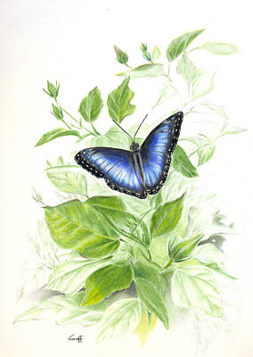 Painting - Blue Morpho On Hibiscus by Penrith Goff