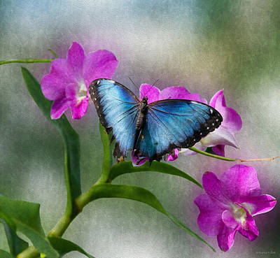Photograph - Blue Morpho With Orchids by Bonnie Follett