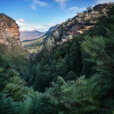 Photograph - Blue Mountains Vista From Leura Cascades Walking Track by Daniela Constantinescu