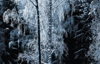 Blue Nature Winter Scenery Art Print by Christian Lagereek