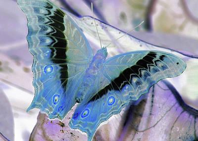 Photograph - Blue Negative by JAMART Photography
