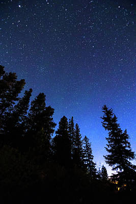 Photograph - Blue Night Forest Portrait  by James BO Insogna