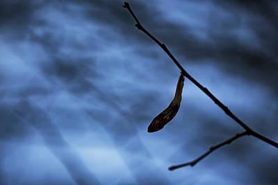 Photograph - Blue Night by Vincent Pelletier