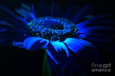 Flowers And Water Drops Wall Art - Photograph - Blue October by Krissy Katsimbras