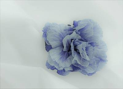 Photograph - Blue On Blue by Lori Pessin Lafargue