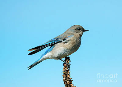 Photograph - Blue On Blue by Mike Dawson