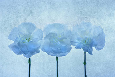 Carnations Photograph - Blue On Blue by Rebecca Cozart