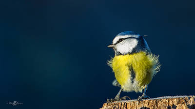 Yellow On Blue Photograph - Blue On Blue by Torbjorn Swenelius