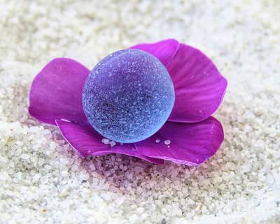 Photograph - Blue On Purple by Janice Drew