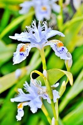 Photograph - Emanating Light - Blue On White Iris by Kim Bemis