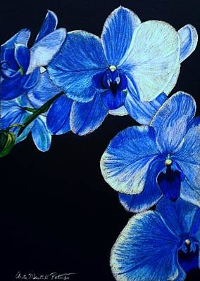 Drawing - Blue Orchid - Electric-blue Phalaenopsis by Anita Putman