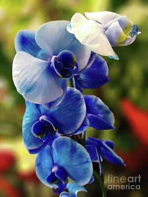 Digital Art - Blue Orchid by Jasna Dragun