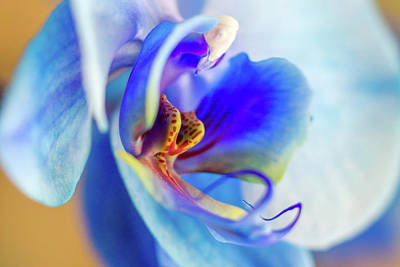 Flower Abstract Photograph - Blue Orchid by Stelios Kleanthous