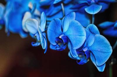 Photograph - Blue Orchids by Diana Mary Sharpton